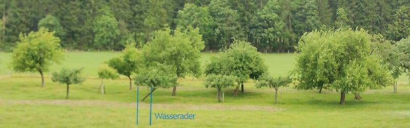 Strahlenflüchter Apfelbaum